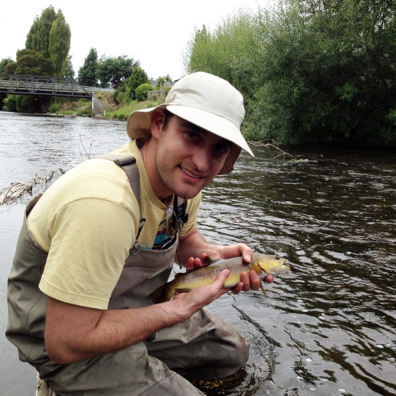Wild brown trout, dry fly fishing, Tyenna river.