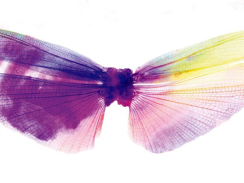 Fairy's Kiss