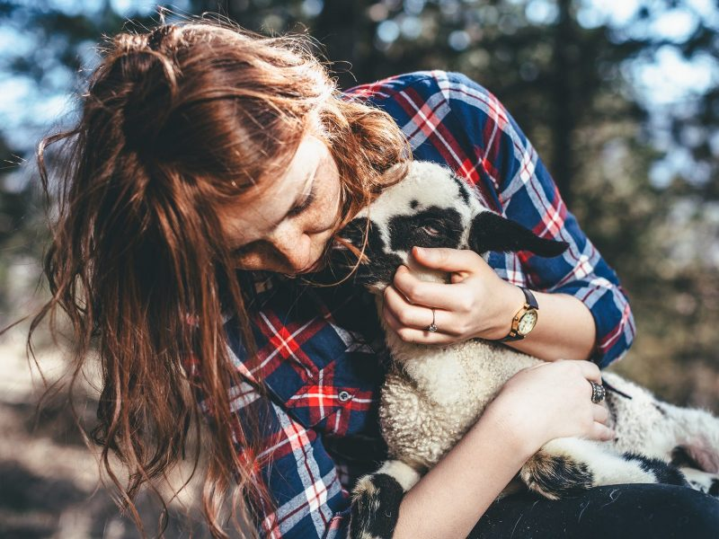 Girl in checked shirt holding and cuddling a baby lamb