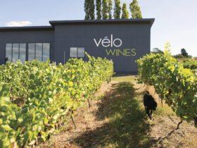 Velo Wines