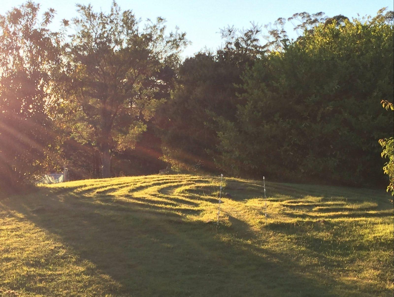 picture of sunlight streaming onto the grass labyrinth