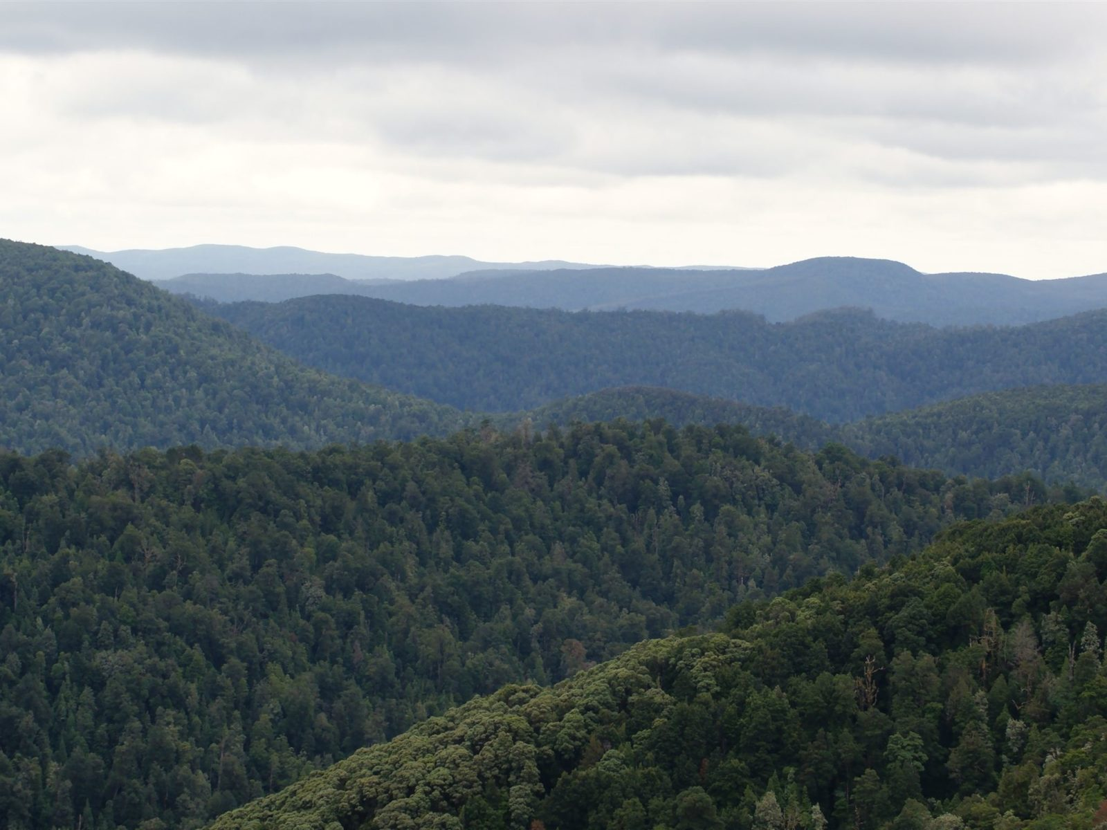 Whyte Hill lookout Waratah