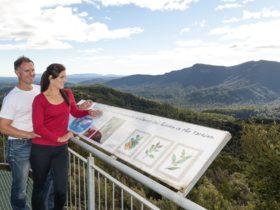 Whyte Hills Lookout Tarkine