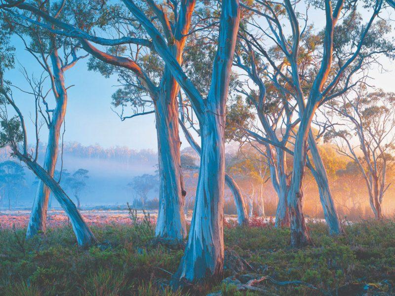 Tasmanian Photography