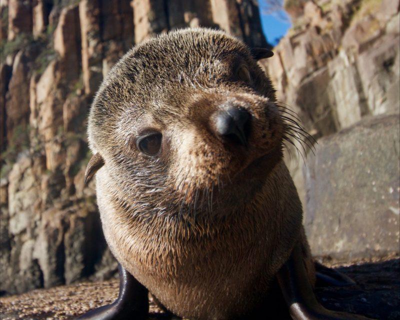 Curious Seal Pup