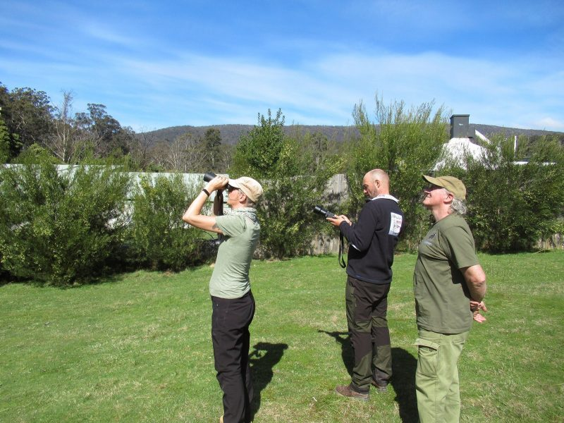watching a pair of sea eagles on one of our day tours