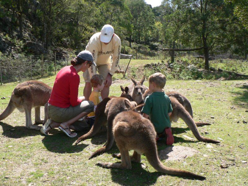Feeding kangaroos at Wings Wildlife Park