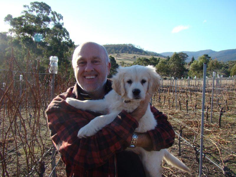 Maeve the vineyard dog