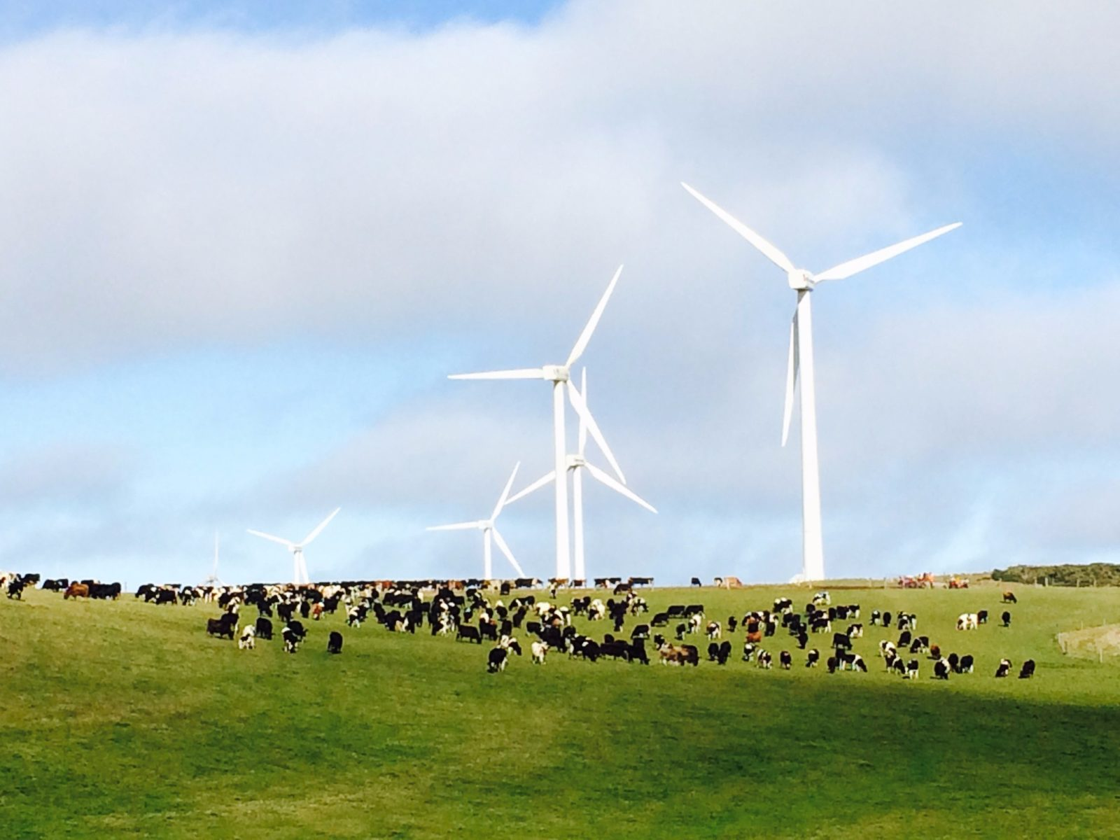 cattle grazing beneath majestic towers