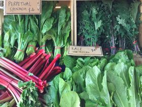 Albury Wodonga Farmers Market