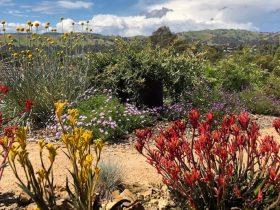 Alexandra Open Gardens