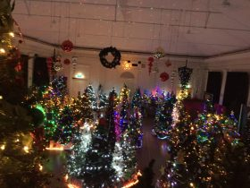 An amazing display of Xmas Trees