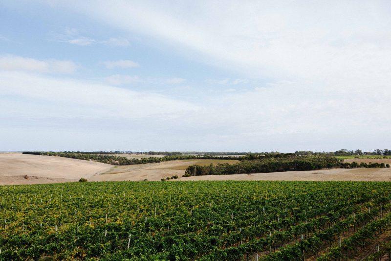 Austin's Winery vineyard vistas and Valley views.