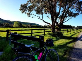 Find the Emerald green rolling hills of Gippsland