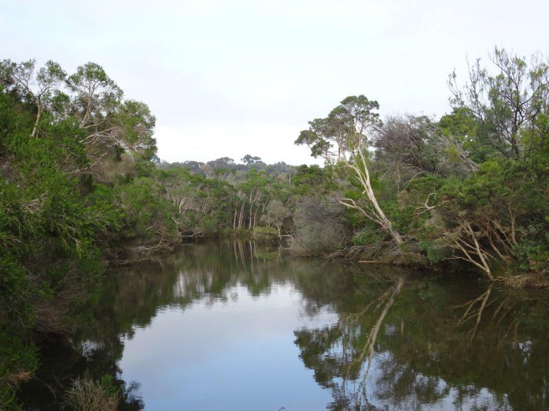 Balcombe Estuary
