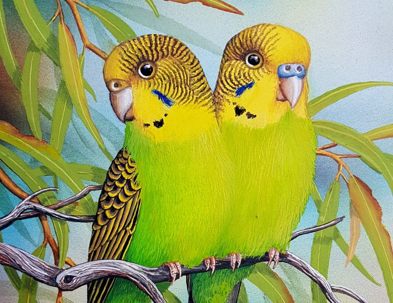 Two Budgies, yellow and green snuggled together in a gum tree, a detail of an artwork by Lyn Cooke.