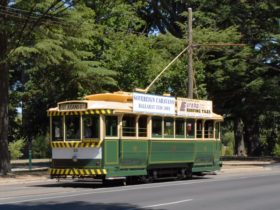 No 33 in 1960's livery in Wendouree Parade