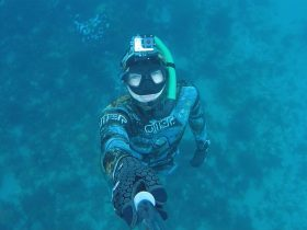 Learn to freedive, Freediving, Spearfishing, Freedive Victoria