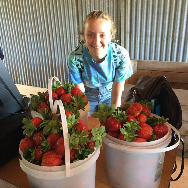 A U-picker girl with three buckets full of strawberries