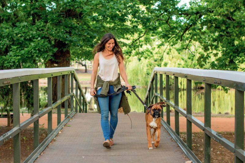 Lady walking dog over bridge from Castlemaine Botanic Gardens to BIG4 Castlemaine Gardens Holiday Pa