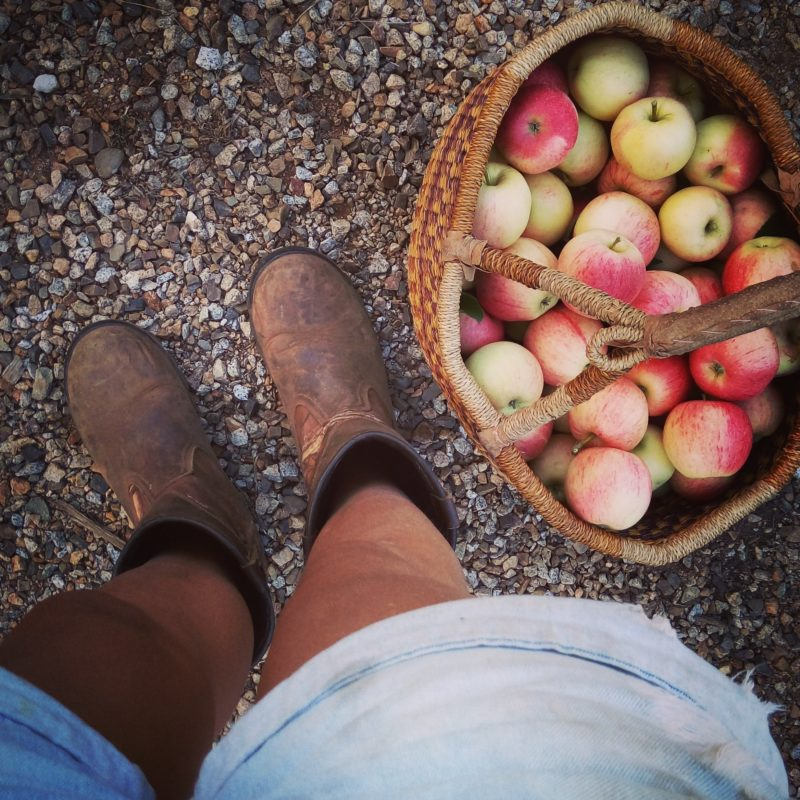 Black Barn Farm - Pick Your Own Apples