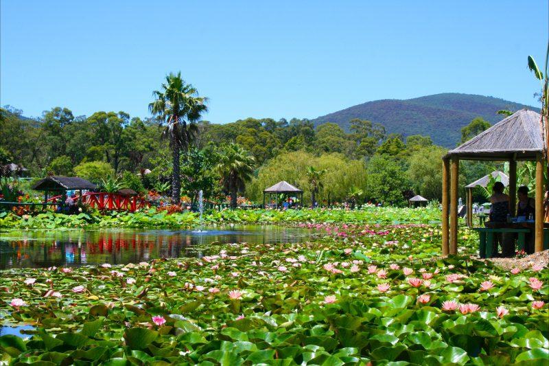 Monet's Lake