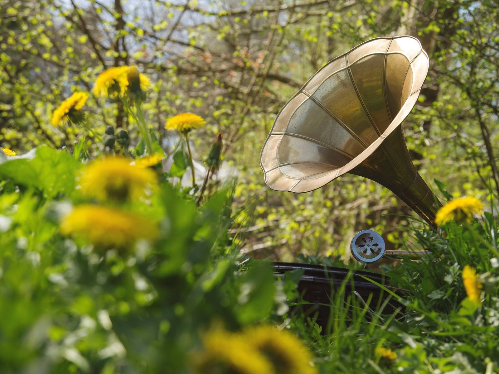 Branch Out: Music to Play to Plants