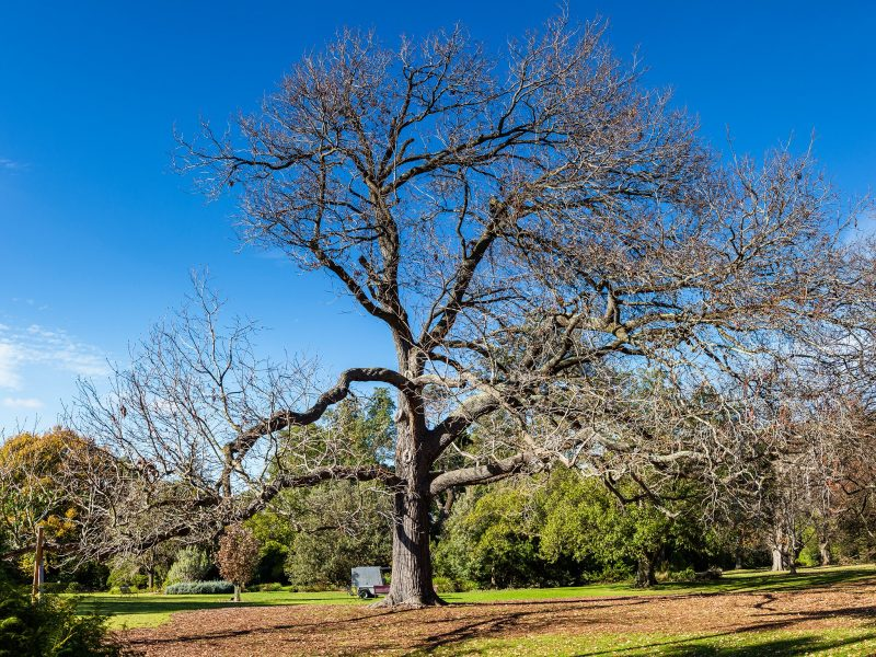 Branch Out: Talking Trees