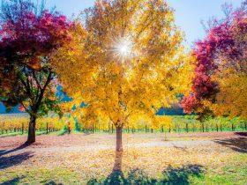 Autumn in Porepunkah, Artist:Jason Edwards