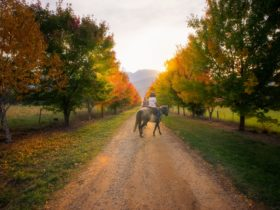 Horse riding in the Buckland Valley