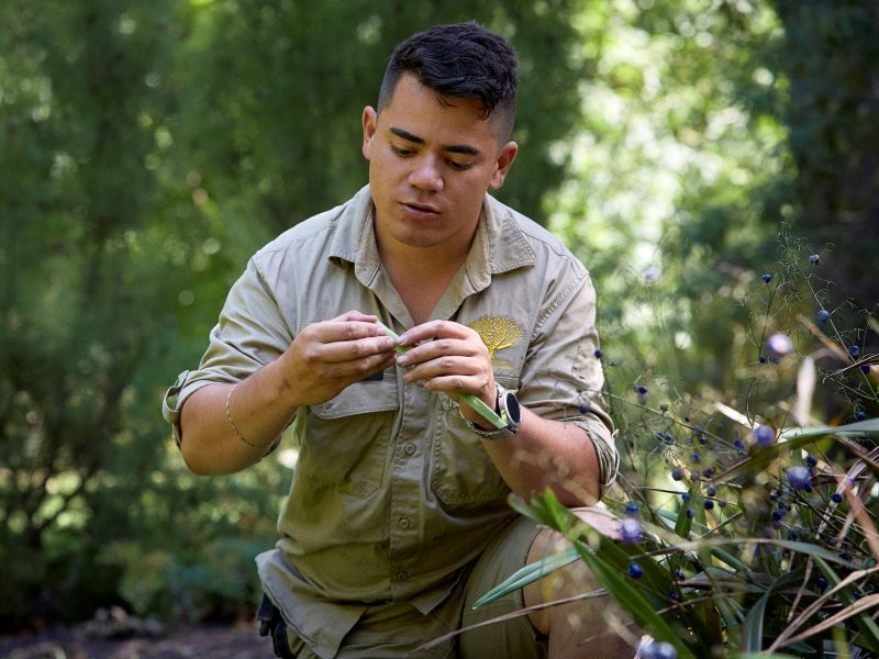 Bush Food Experience: International Day of the World's Indigenous Peoples