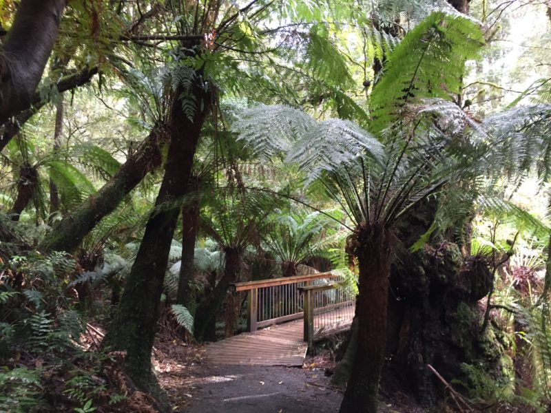 Maits Rest, rainforest walk.
