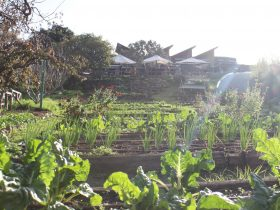 Hone Lane Organic Farm