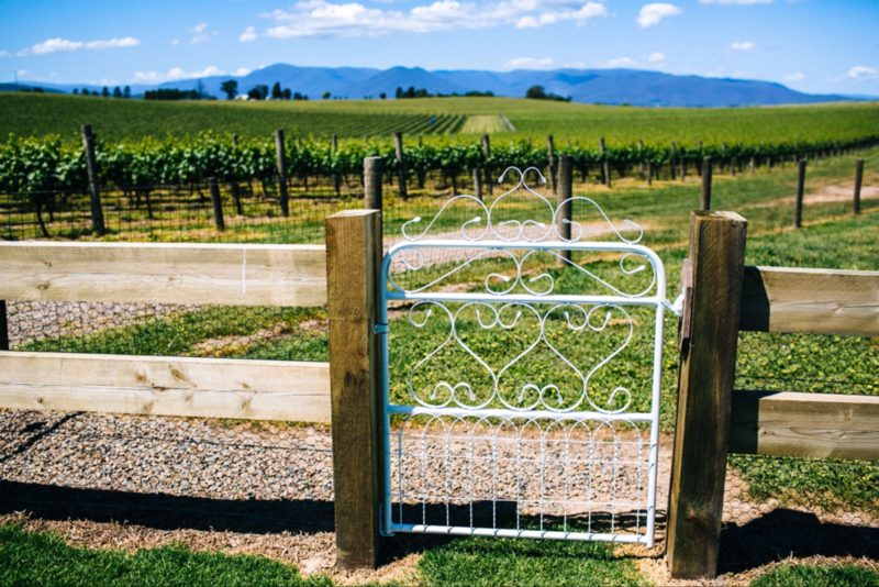 A view o f the vineyards on Chillout Travel's Yarra Valley tour.