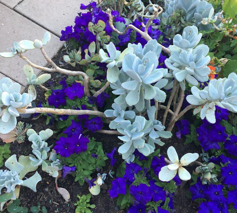 Carmel's Garden