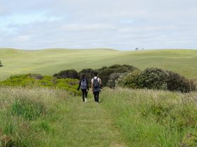 Two hikers on the green grass track of the George Bass Coastal Walk