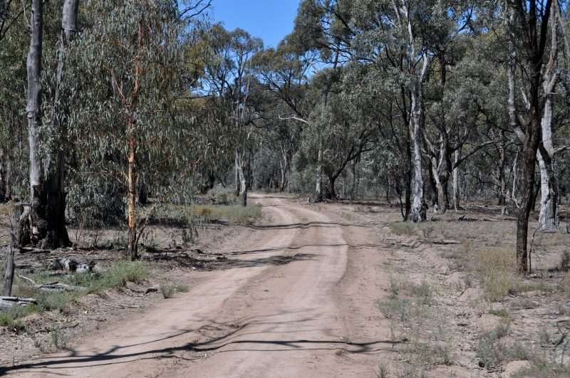 Gunbower National Park - course of the 12.5km and 21.1km trail runs, Cohuna.