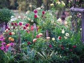 Picking Garden