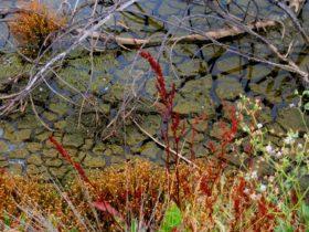 Cusson Lake's Edge in December