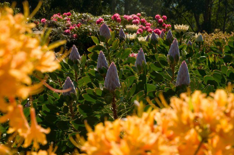Dandenong Ranges Botanic Garden. Credit: Parks Victoria