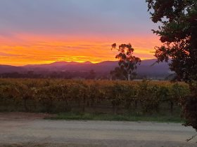 Sunset over the vineyard at Darling Estate Wines
