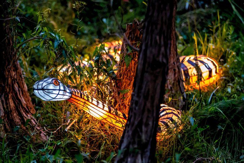 Snake lantern