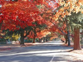 Delany Avenue in Autumn