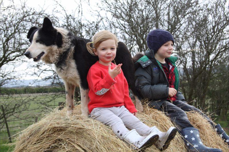 Kids enjoying farmstay