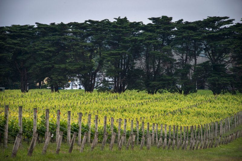 Dromana Estate Vineyards