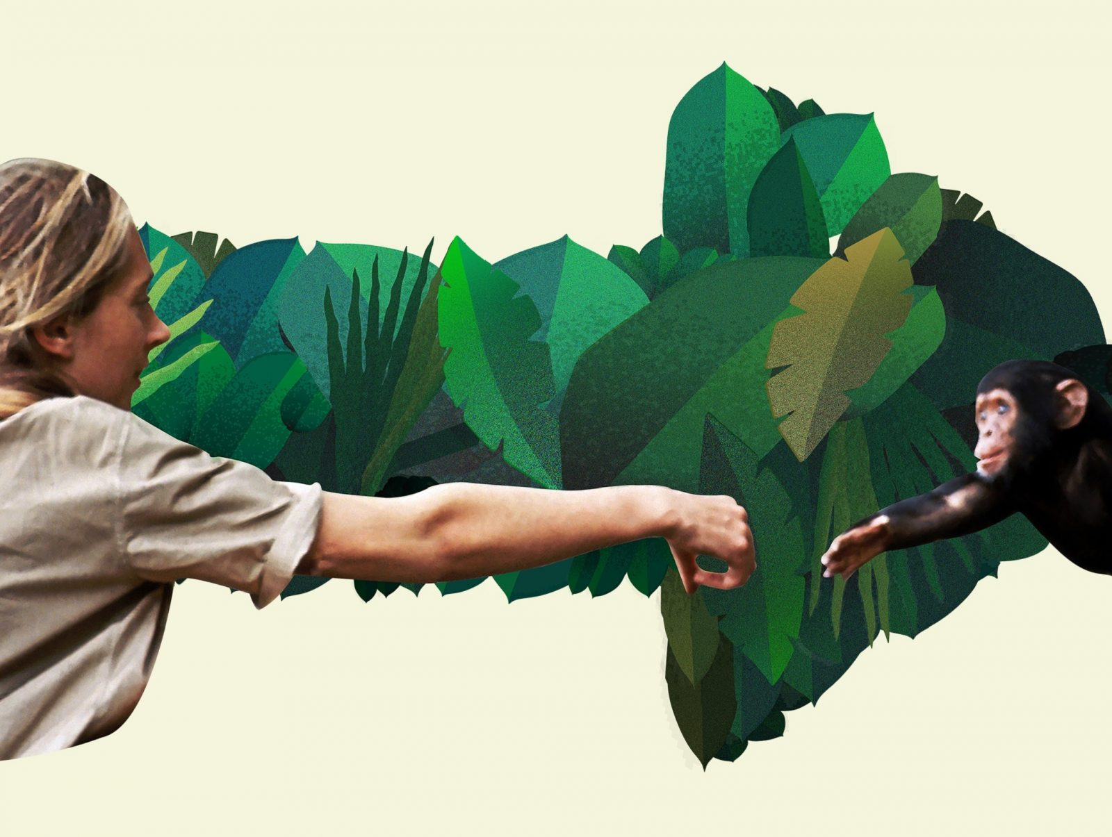 Jane Goodall: Rewind the Future. Jane Goodall reaching out for a tiny chimpanzee.
