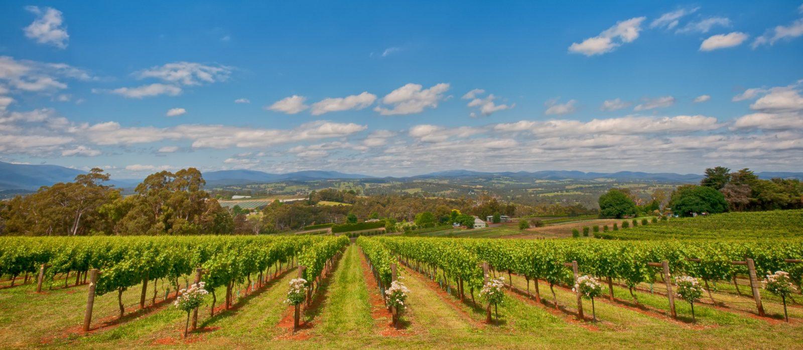 Elmswood Estate - Yarra Valley Winery