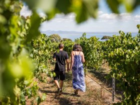 Bellarine Winery