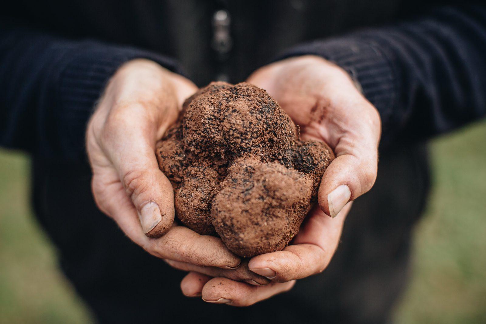 Black cat truffles