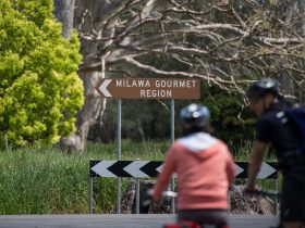 Cycling to Milawa
